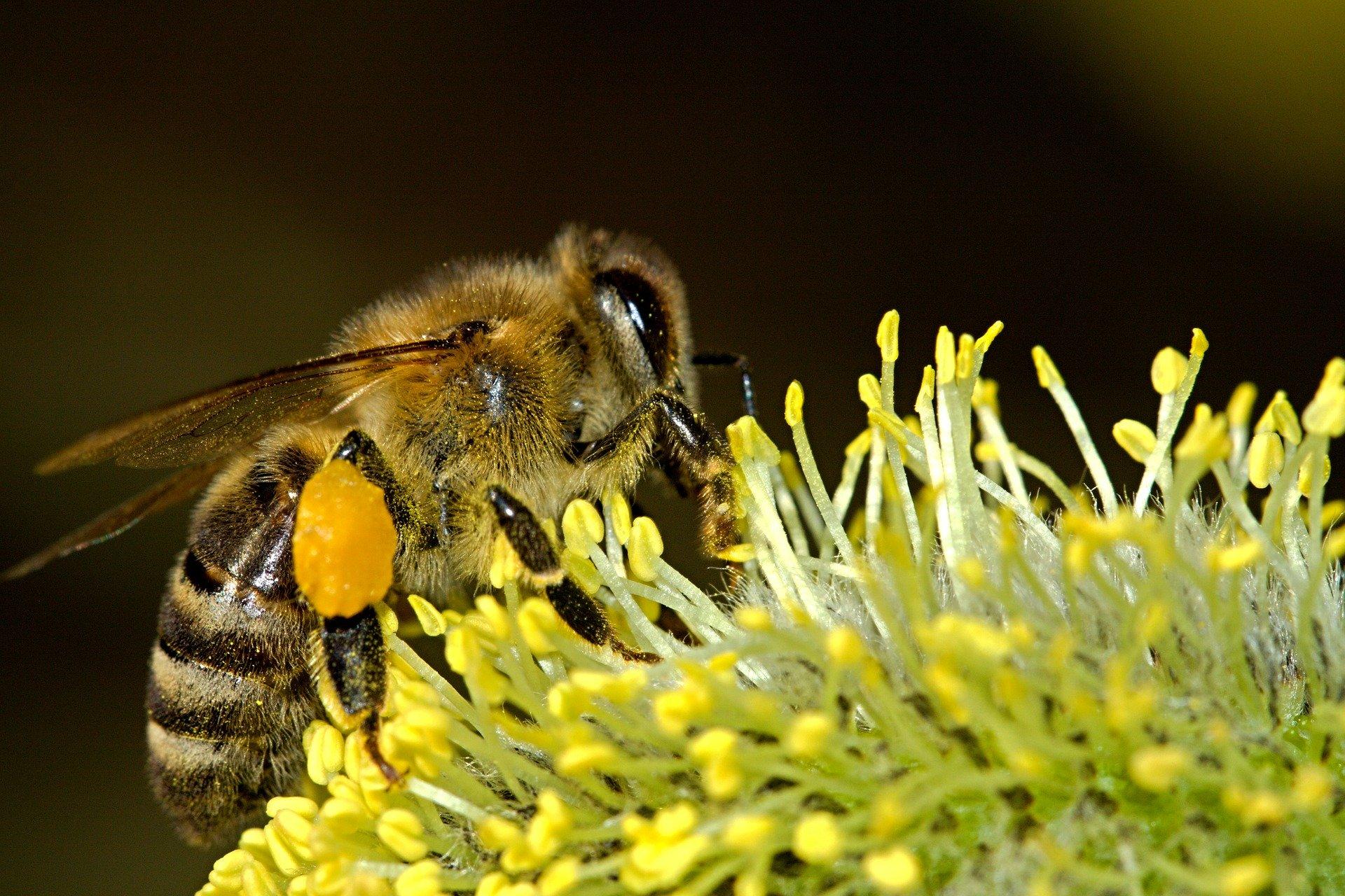 Ritrovamento curioso: il Viasat BluTrack salva le api